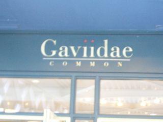 Gaviidae