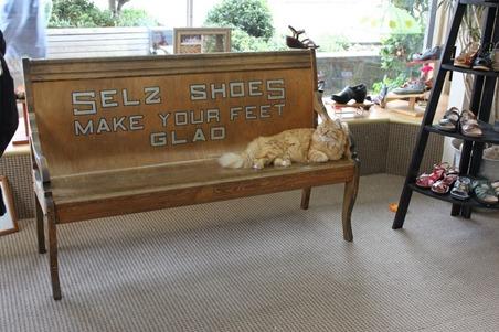 ShoeStoreCat