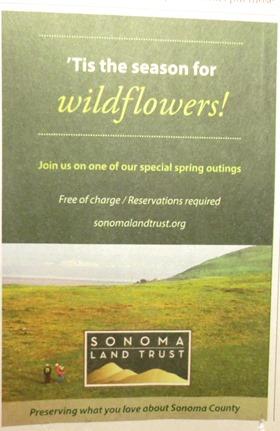 Tis the season Sonoma