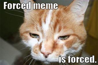 forced_meme_is_forced_trollcat