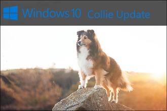 Windows Collie