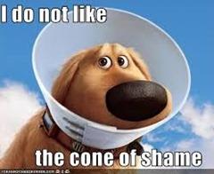 Doug cone of shame