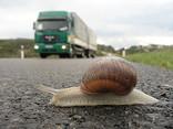 Slow_crossing